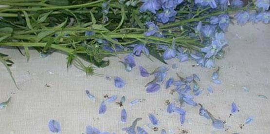 Photo of Ethylene Flower Damage