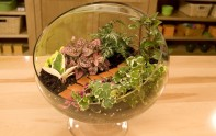 How to create a Terrarium!