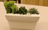 How to plant a Cactus Garden!