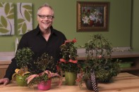 How to accent Plants and Topiary Trees with Ribbon!