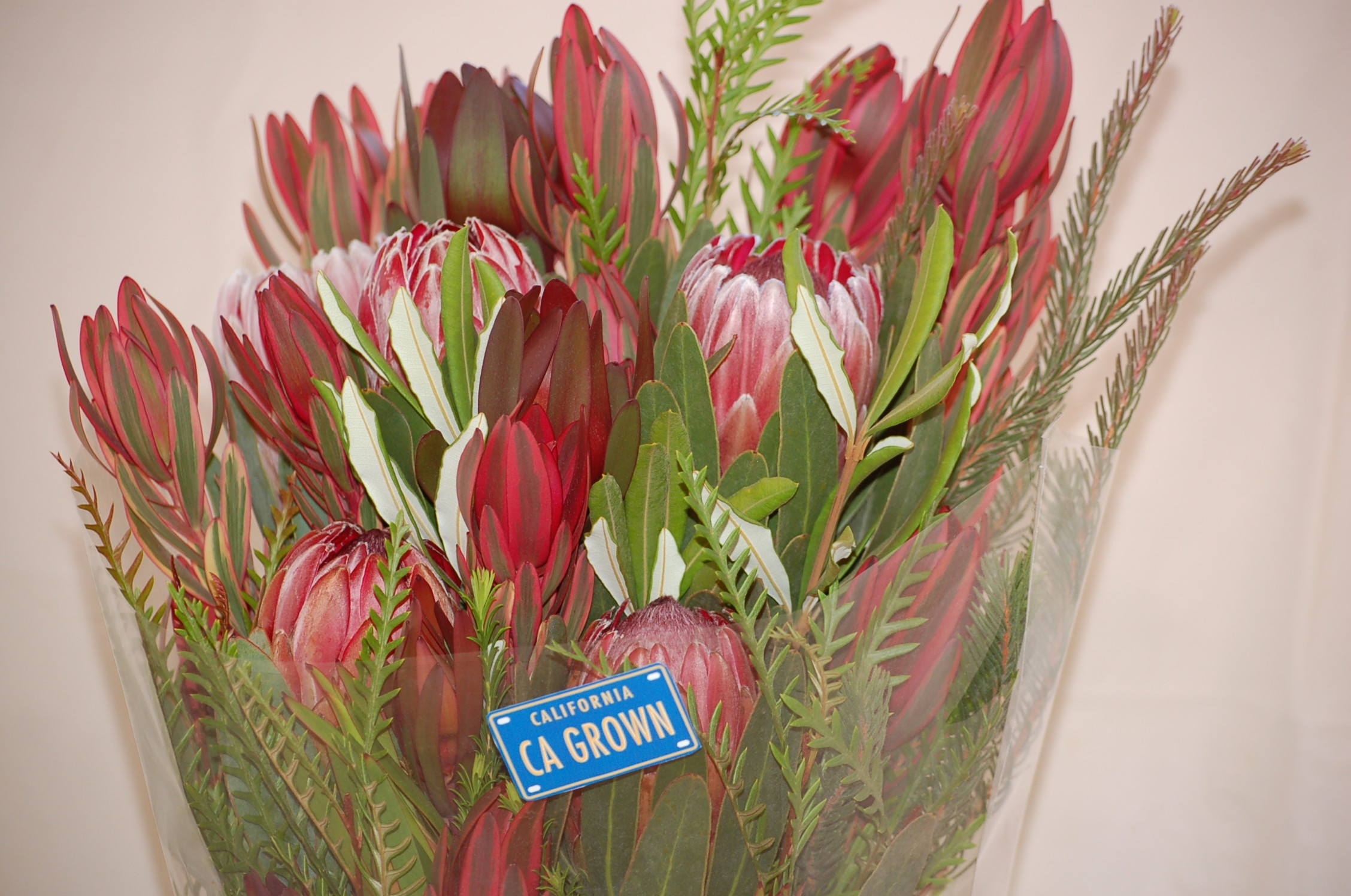 protea flower bouquet