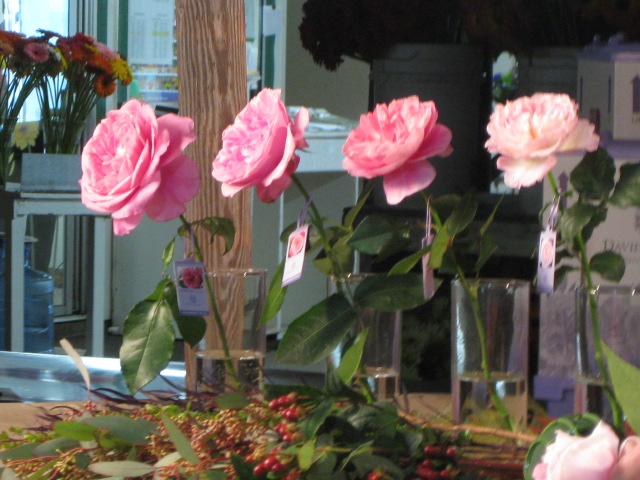 This Week On The Ca Grown Experience David Austin Roses