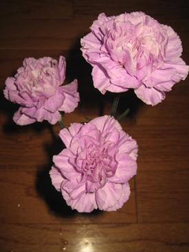 Carnation-Lavender-Moonlite-Florigene