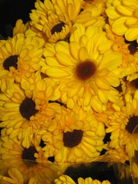 Chrysanthemum Yellow Daisy Pompon Viking Ubloom