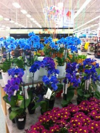 Blue, Purple and Indigo Orchid Display