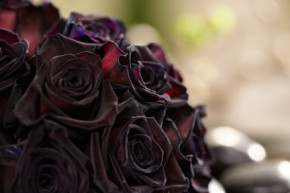 TWILIGHT ROSES from Esprit Miami Premiere on Fun with Flowers and J