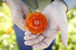 10 Ways CA Grown Flowers Help Everyone!