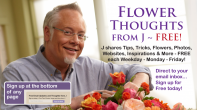 FlowerThoughts From J... FREE Ideas, Tips, Techniques and More!