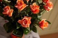Sparkling Tangerine Tango Roses for Valentines Day