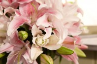 The Science and Biology of Flowers…Plus the Secrets to creating a Lily Topiary