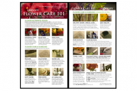 Flower Care 101 Card_storeimage