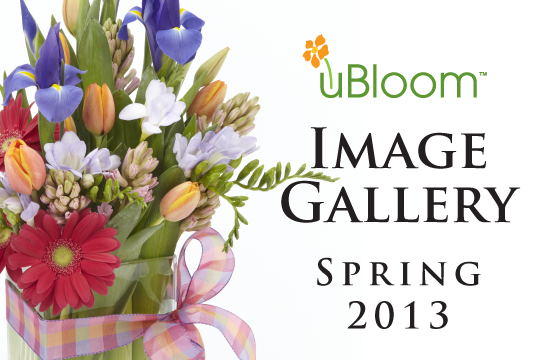 The uBloom Image Gallery_Spring 2013