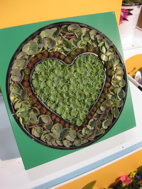 "Proven Winners ""HEART"" Succulent... LOVE!!!!"