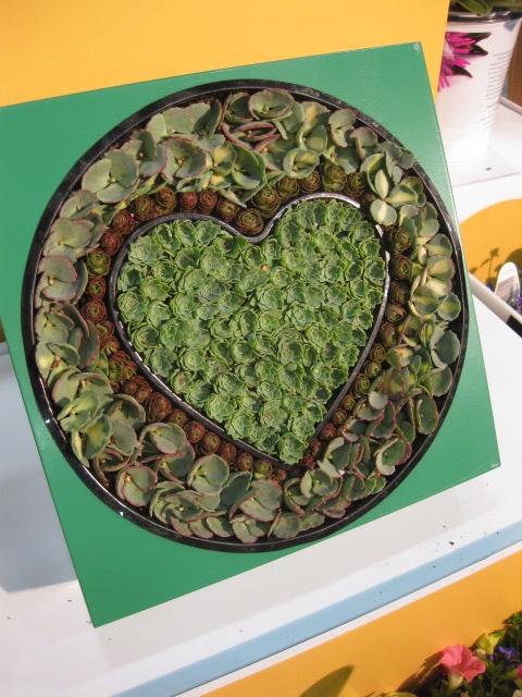 "Proven Winners ""HEART"" Succulent... LOVE!!!!"