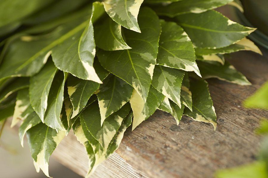 Fresh Florida Grown Foliage from Hagstrom & Son