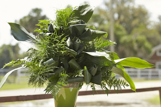 The Florida Fresh Foliage and Flower Tour Visits Ronald Jones Ferneries!