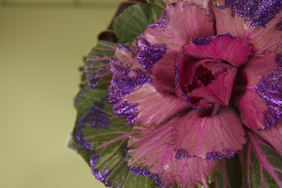 Glittered Brassica from Sun Valley on this week's Fun with Flowers and J Show!