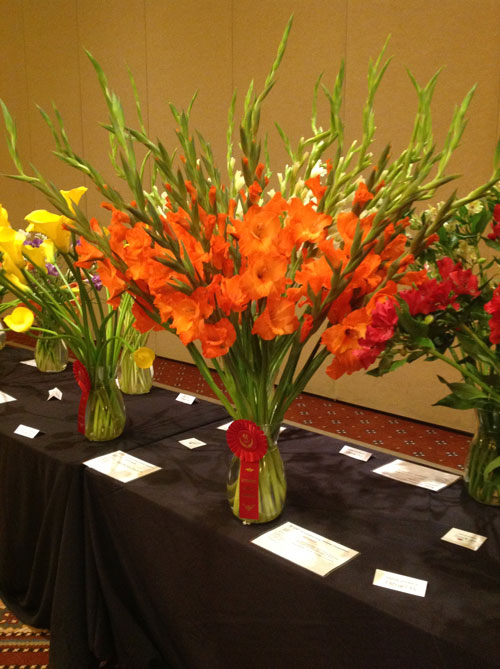 "Cal-Glads American grown Gladiolus ""SunKissed"" took the Red ribbon in Bulb Flowers at the SAF New Varieties Exhibit"