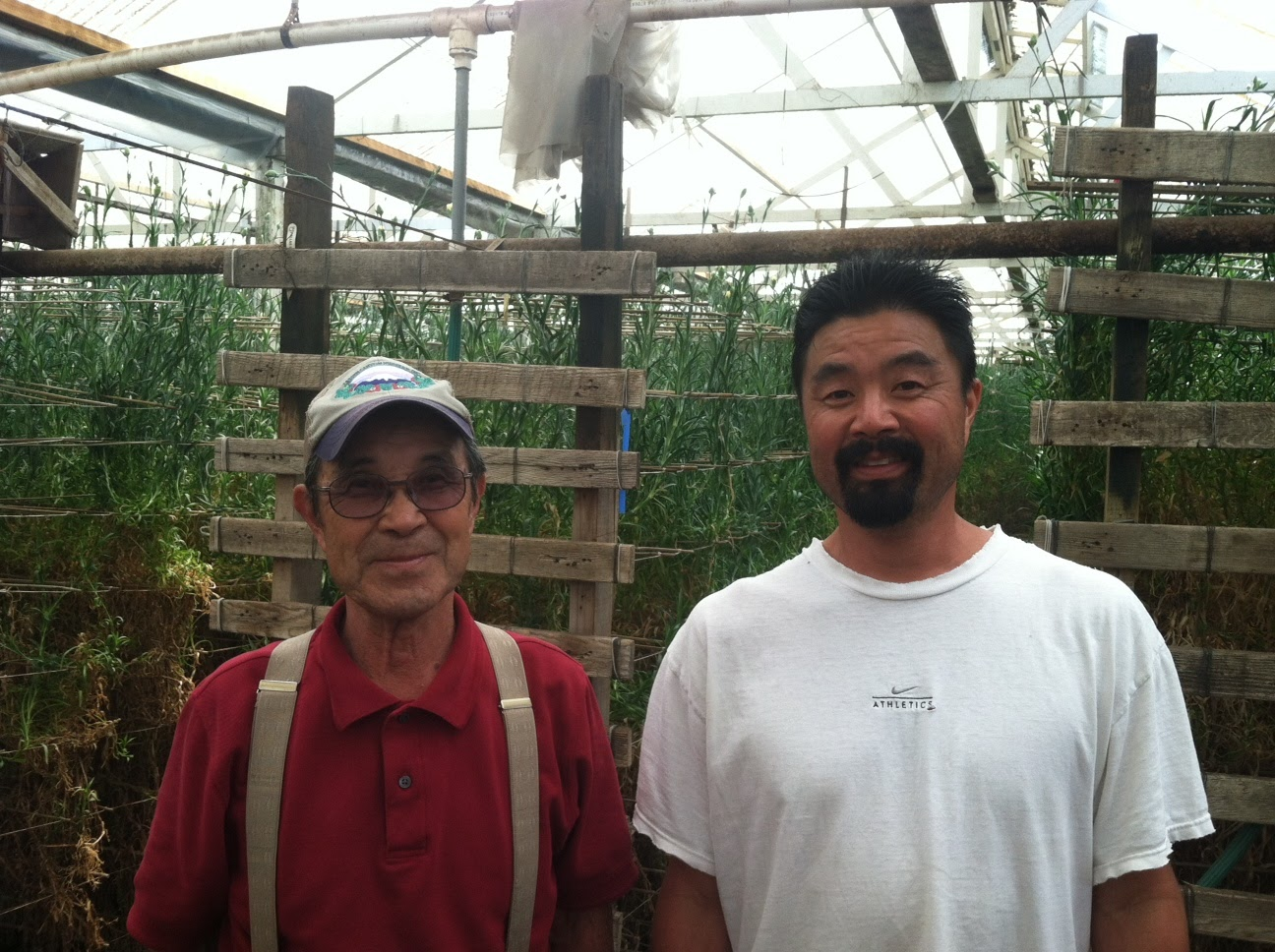 The Last Carnation Grower in the USA... Isamu and Ben Akiyama at Akiyama Nursery in Watsonville CA.