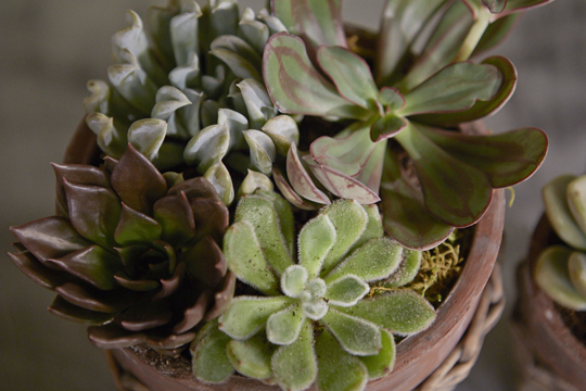 How to arrange flowers- Succulent Garden