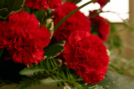 How to arrange flowers_American Grown Carnations Arrangement