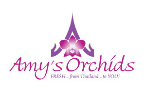 Amy's Orchids