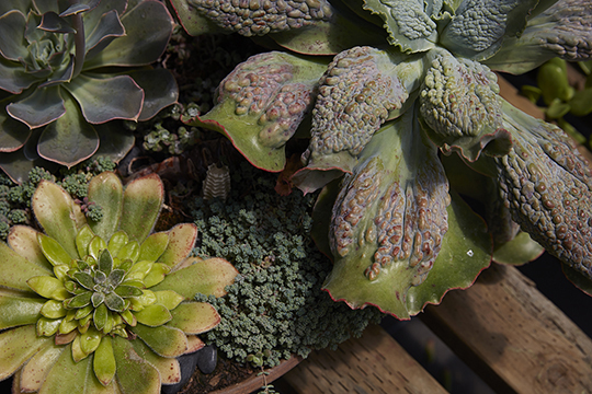 The CA Grown Experience Visits Succulent Gardens