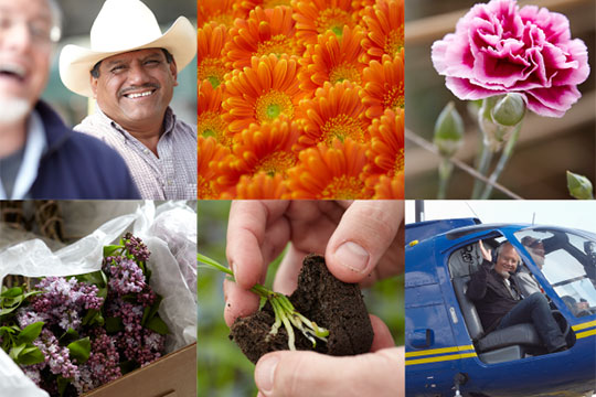 The CA Grown Experience_The Origins of the CA Grown Experience