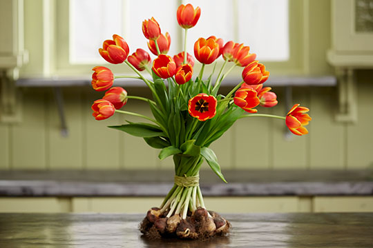 How to Arrange Flowers_Tulips on the Bulb