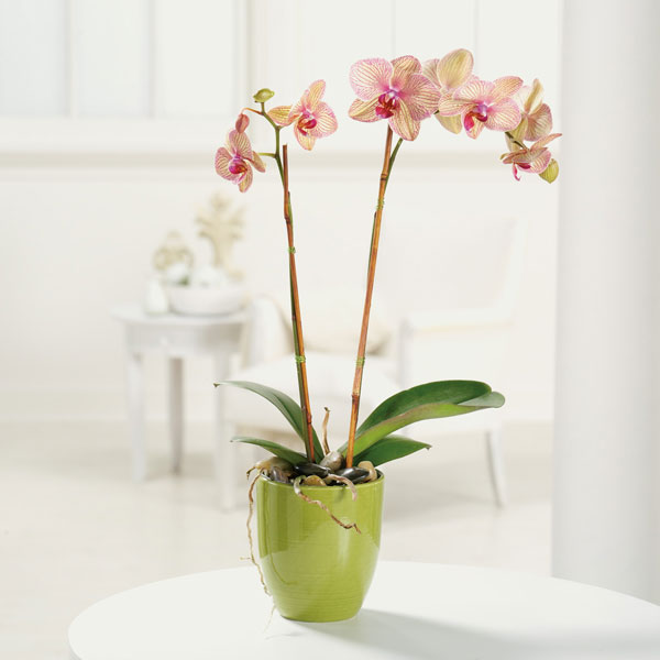 Orchid-in-da-house!