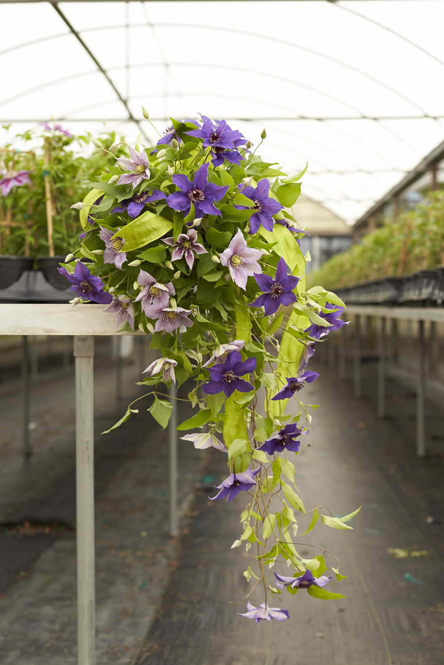 Choose Clematis for your Wedding!