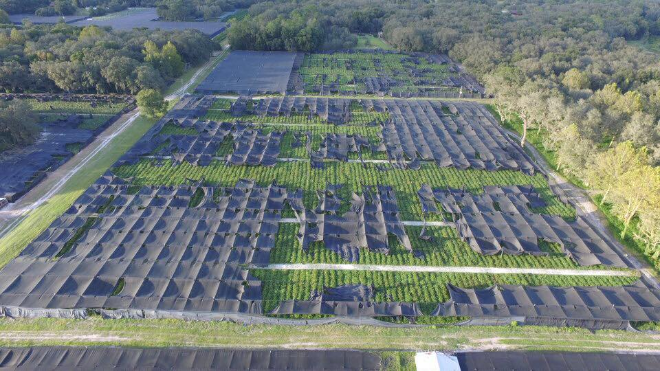 To Florida Fern Farms- 100's of acres have been affected.