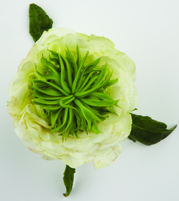 Green Eye rose adds texture