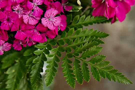 Fabulous Foliage Bouquets - From Bobbi Ecker!
