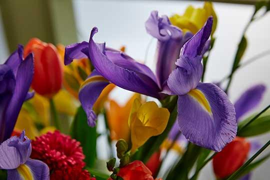 Flowers for International Women's Day!