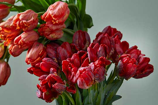 Fancy Tulip Vase Arrangements!