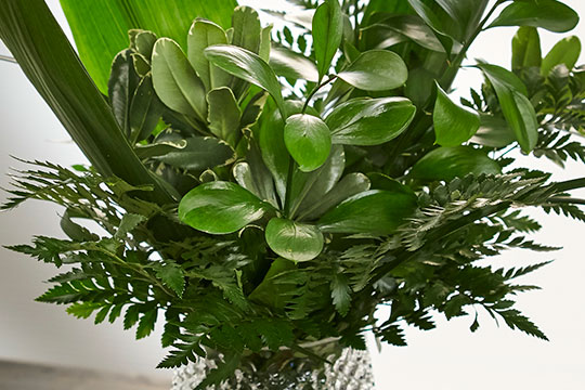 Fabulous Foliage Bouquets from FernTrust