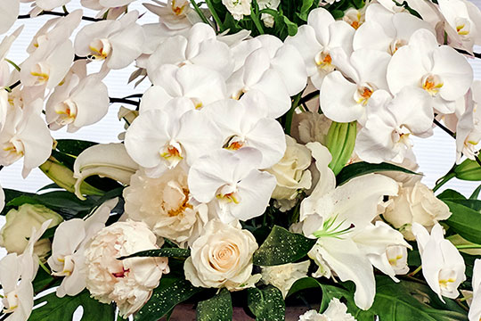 Phalaenopsis Orchid Event Centerpiece!