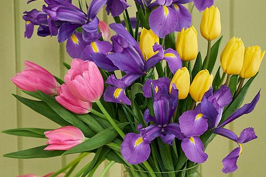 Tulip and Iris Arrangement
