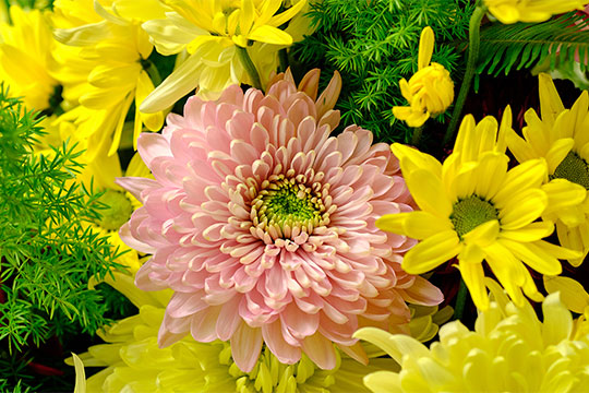 Spring Chrysanthemum Centerpiece